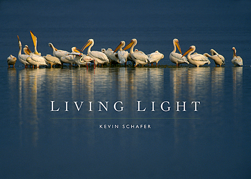 Living Light Cover